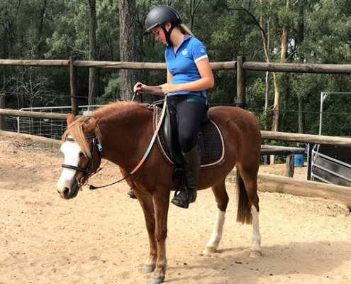 Horses/Ponies 58