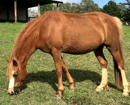 Horses/Ponies 57