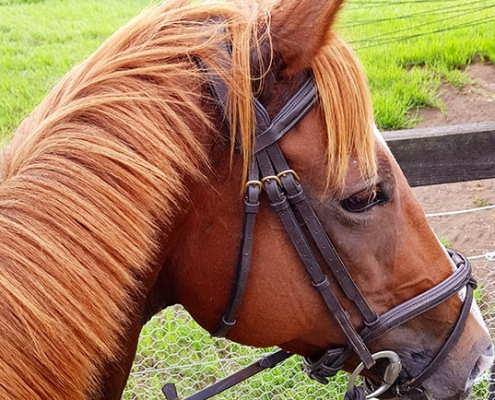 Horses/Ponies 16