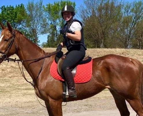 Horses/Ponies 18