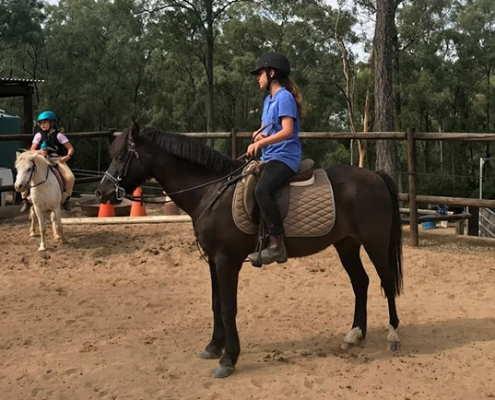 Past Horses/Ponies 13