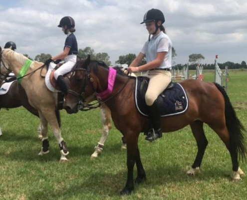 Horses/Ponies 52