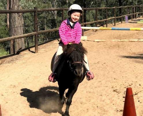 Horses/Ponies 81
