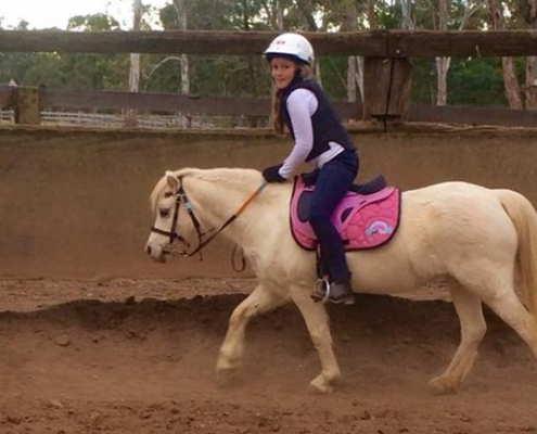 Horses/Ponies 65