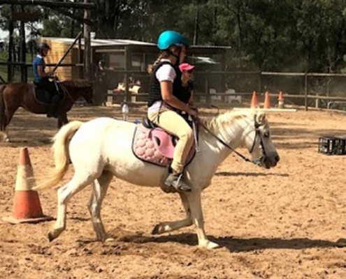 Horses/Ponies 64