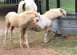 Horses/Ponies 90
