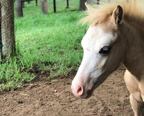 Horses/Ponies 94