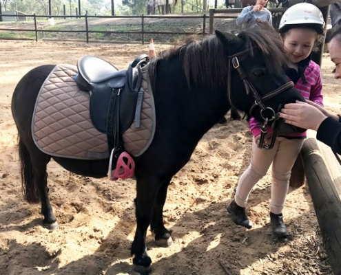 Horses/Ponies 82