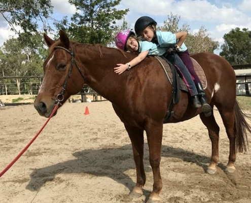 Horses/Ponies 21