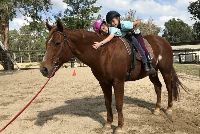 Horses/Ponies 20
