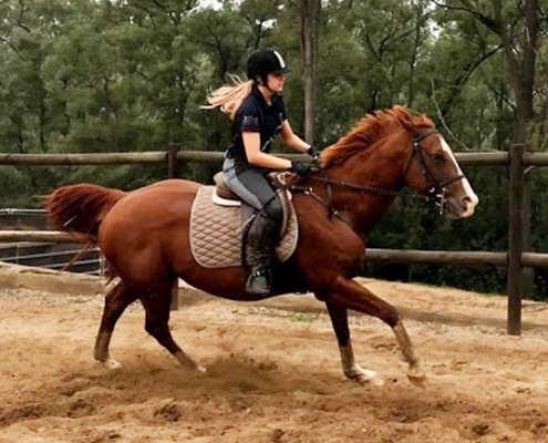 Horses/Ponies 35