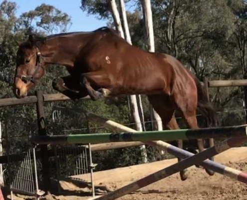 Horses/Ponies 8