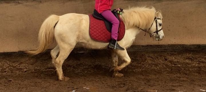 Ariana's 5th lessons and she has stepped up on TT Snowy.  Her dream is to become