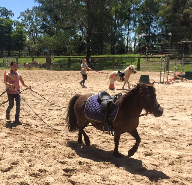 Day camps are on at Tic Toc Equestrian: ...Creates childhood memories... 3