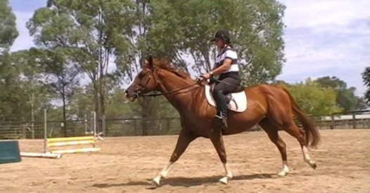 For sale - Maddisons Dream - Paint Reg - 9yo - Approx 15'1h