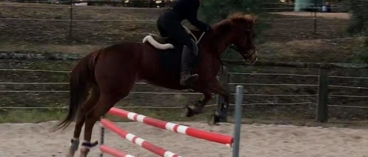 How to focus on your next jump by Tamara Dover.  Tamara and TT Wildfire have ach