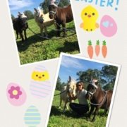 I found some bunnies today in the paddock!  Wishing you all a happy Easter.