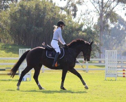 Horses/Ponies 1