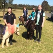 Stars in kids's eyes has been brought by The Tic Toc Equestrian team: TT Charli