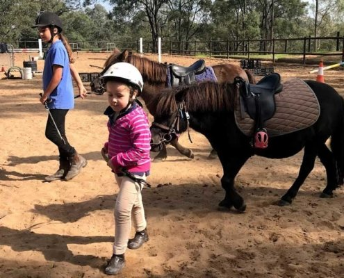 Horses/Ponies 84