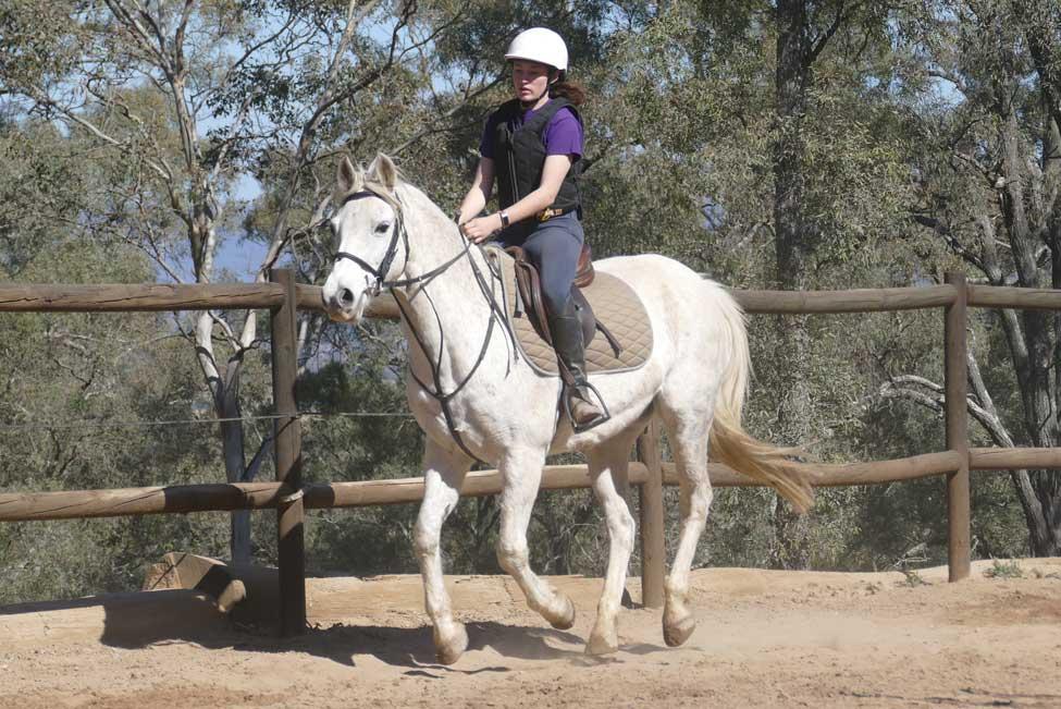 Horses/Ponies 37