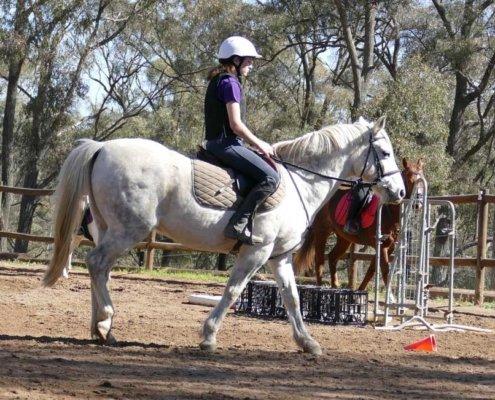Horses/Ponies 41