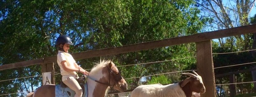 TT Tank is training to be a cattle pony, chasing Lana out of the arena... Was so