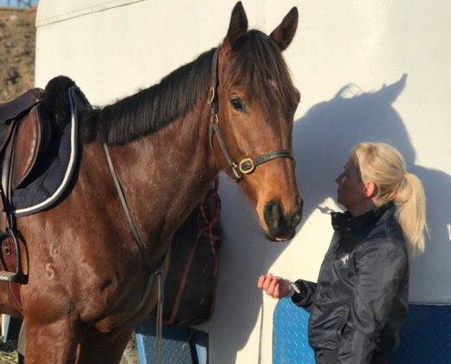 Horses/Ponies 5