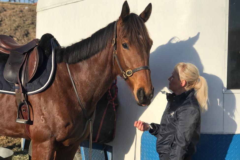 Horses/Ponies 4