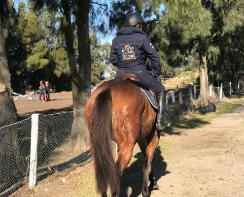 Horses/Ponies 7