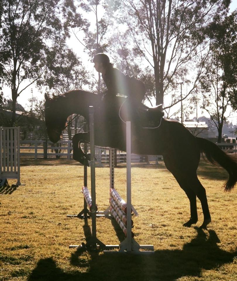 TT You Know You do has stepped up into the big world of Showjumping. 9