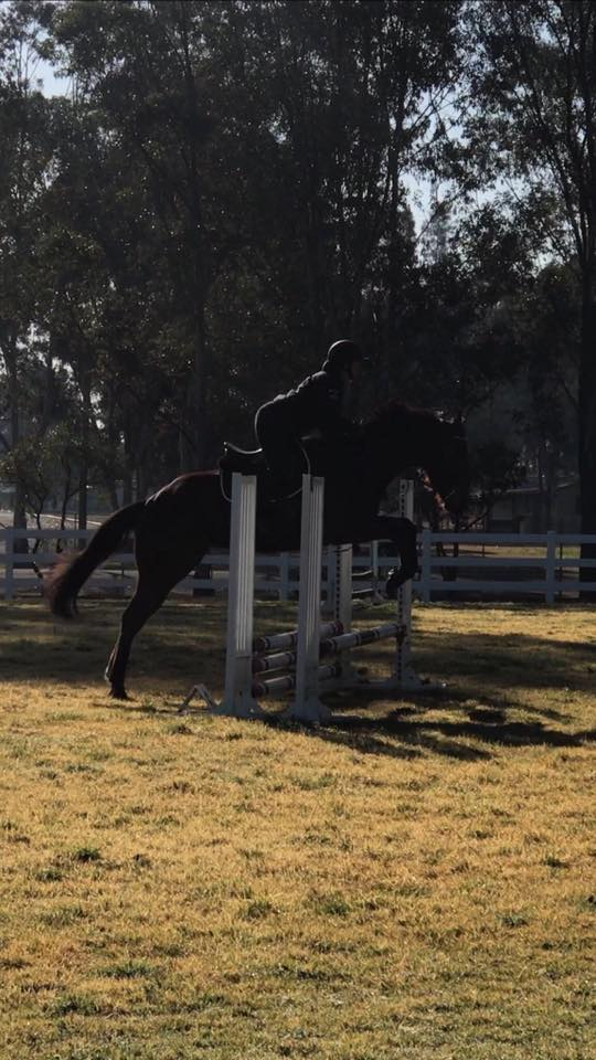 TT You Know You do has stepped up into the big world of Showjumping. 3