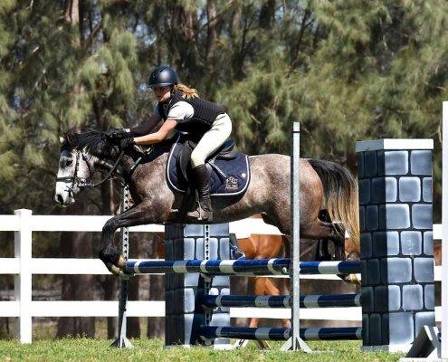 Horses/Ponies 42