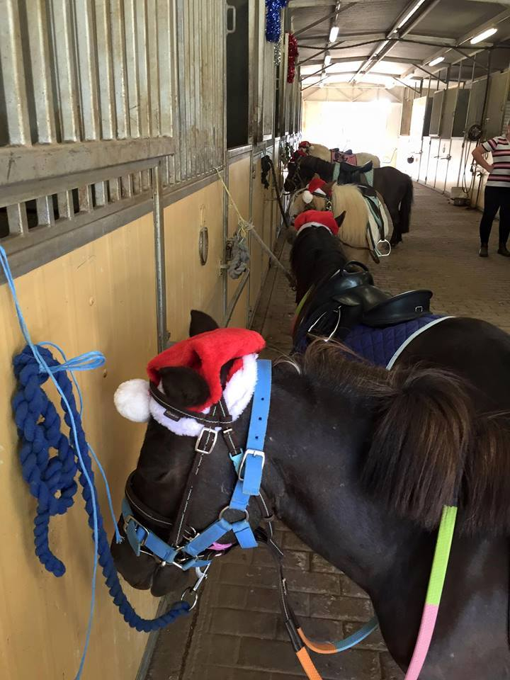 Tic Toc Equestrian Christmas Party on Sunday ! 1