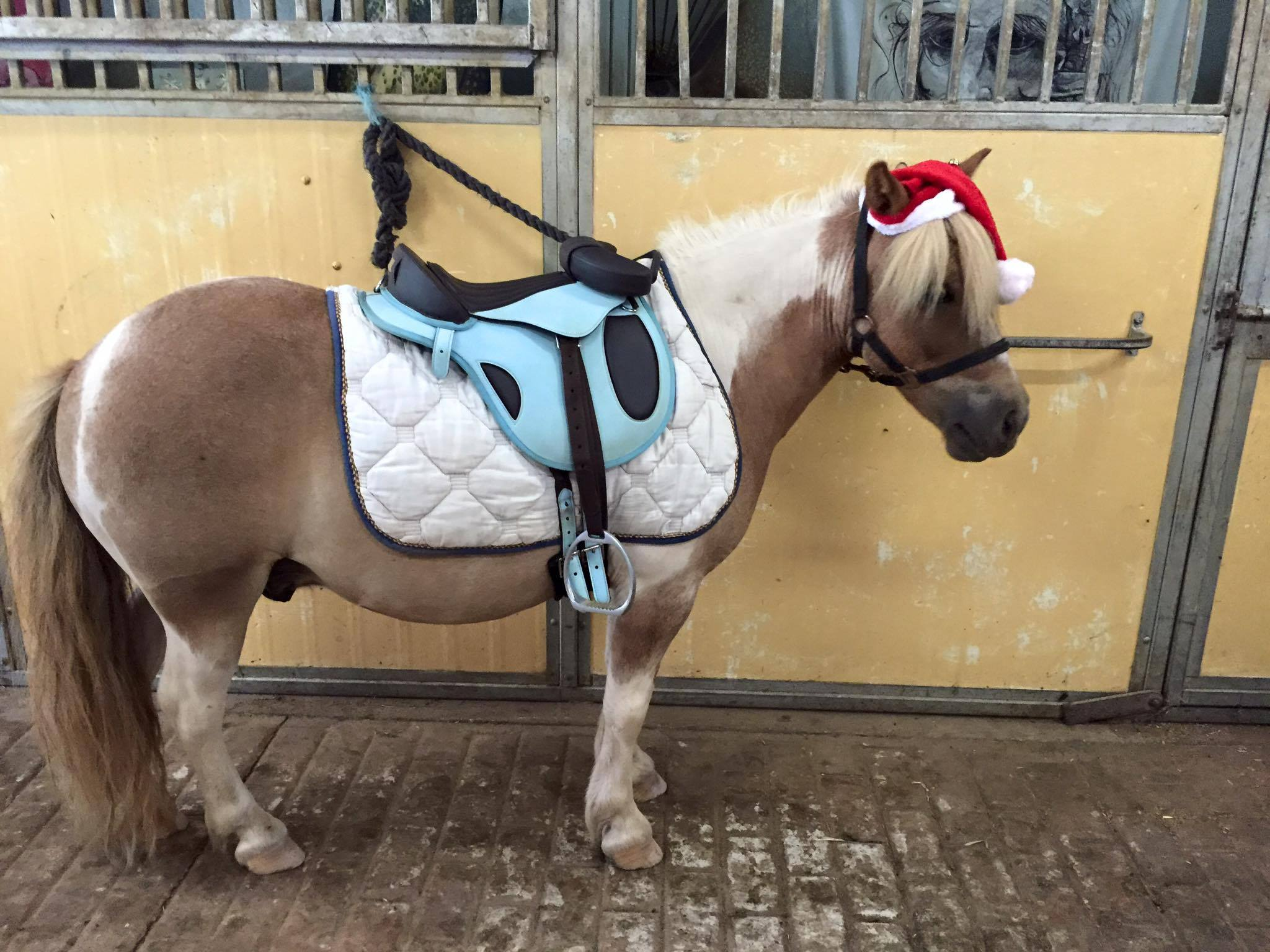Tic Toc Equestrian Christmas Party on Sunday ! 2