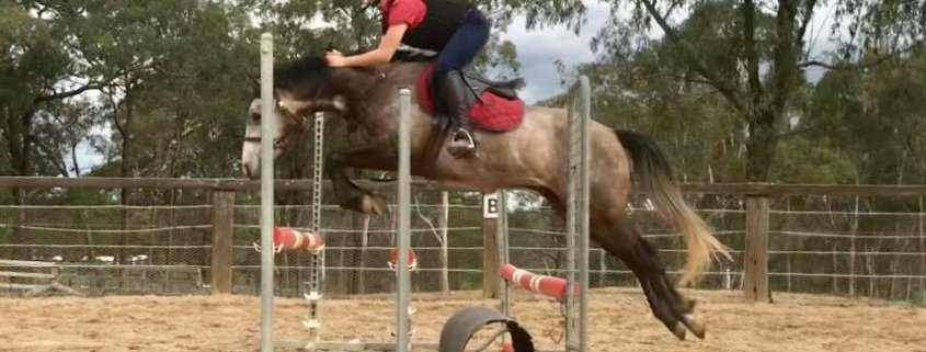 Wednesday Jumping lesson topic: Learn how to follow your horse with your hands o