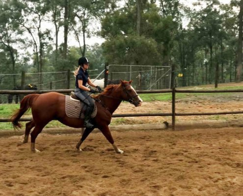 Horses/Ponies 36