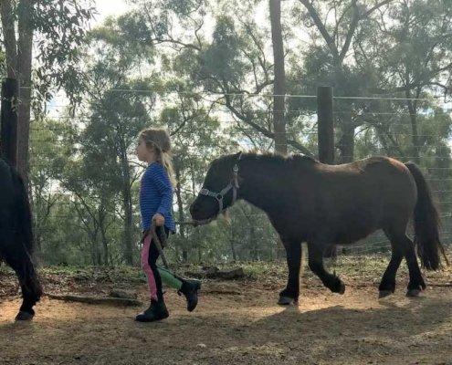 Horses/Ponies 74