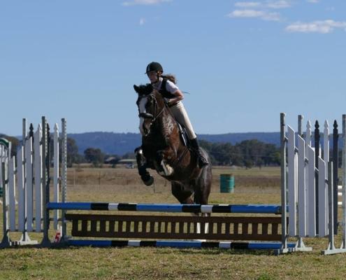 Horses/Ponies 10