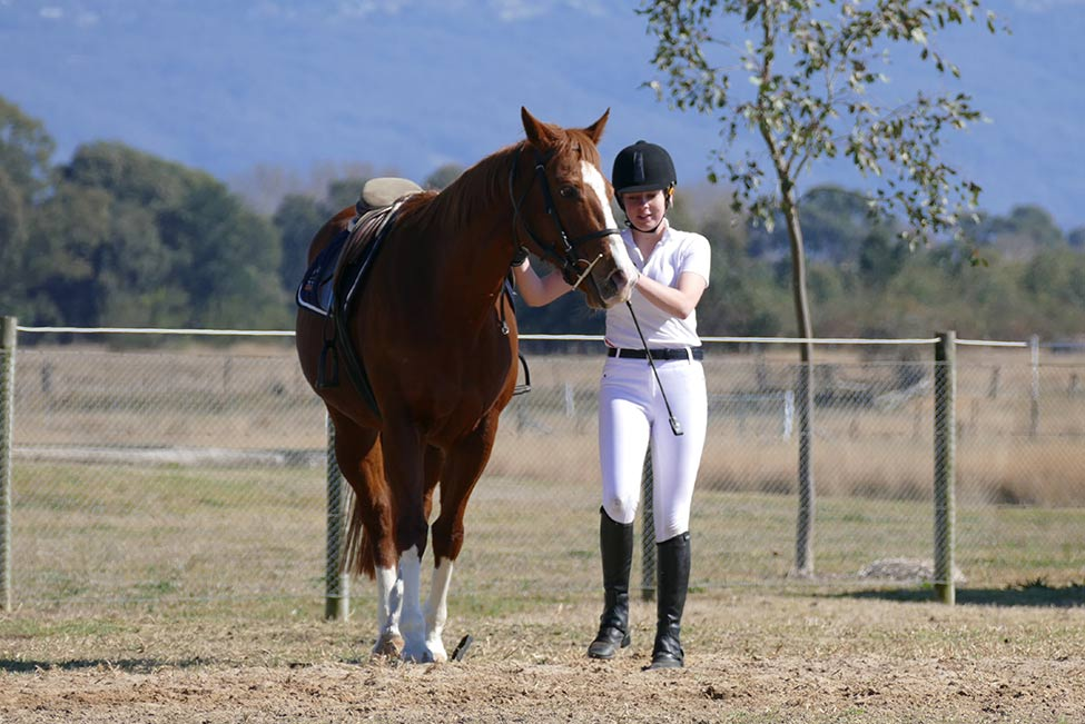 Horses/Ponies 30