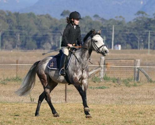 Horses/Ponies 48