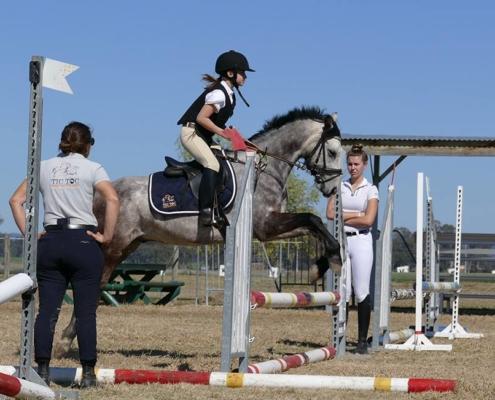 Horses/Ponies 45