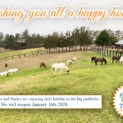 Happy Holidays!  The Horses and Ponies are enjoying their holiday in the big pad
